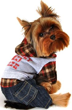 Dog Apparel AP767M Plaid Hoodie Jeans Clothing For Small Pets.jpg 428×650 pixels