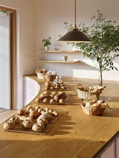 Japanese bakery featuring a tree growing out of its curved timber counter.