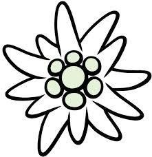 stella alpina disegno - Cerca con Google