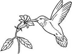 Free Hummingbird Stencil To Print - Bing Images