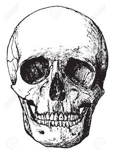 Seitenansicht Des Schädels, Jahrgang Gravierte Darstellung. Lizenzfrei Nutzbare Vektorgrafiken, Clip Arts, Illustrationen. Image 41712227.