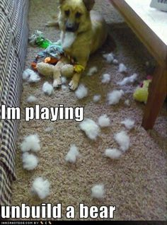 Why our dogs no longer have stuffed animals