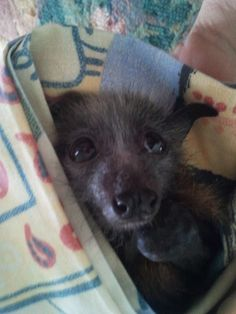 I love bats. The only scary one is the vampire bat.