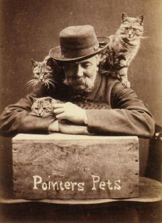 Who doesn't love a funny cat photo? Loving cats isn't a new trend. Keep reading to learn about Harry Pointer and his cat photography from the late Crazy Cat Lady, Crazy Cats, Gatos Cat, Bizarre Photos, Photo Chat, Cat Photography, Cat People, Vintage Cat, Cat Memes
