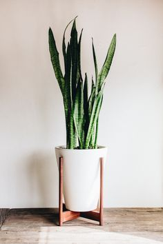 Modernica Case Study Funnel Planter with Wood Stand |