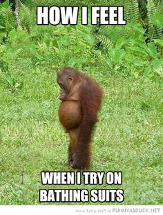 funny-sad-monkey-animal-how-feel-trying-on-bathing-suits-pics.jpg 500×660 pixels