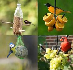 Homemade Bird seed and fruit feeder - Baltimore Orioles love oranges and Cardinals love grapes