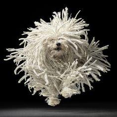 Bem Legaus!: Cachorros modelos - estampa tee