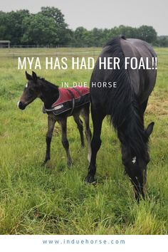 Mya has had her foal! He is the cutest thing ever! #foal #horses Dressage Horses, Cutest Thing Ever, Equestrian, Group, Blog, Animals, Animales, Animaux, Horseback Riding
