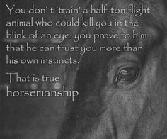 Ideas Horse Training Quotes Animals For 2019 Equine Quotes, Equestrian Quotes, Equestrian Problems, Equestrian Fashion, Pretty Horses, Beautiful Horses, Cute Quotes About Me, Nice Quotes, Inspirational Horse Quotes