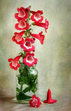 Penstemon by Mandy Disher Florals, via Flickr
