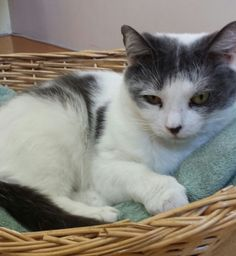 Peppy - I am a very loving 8yr old female... surrendered by my owner.  All I want is a second chance at the life I deserve...a forever home & family that will share all of my love.   Adopt ME! http://www.animalkind.info/content/Adoption_Application/Adoption_Application