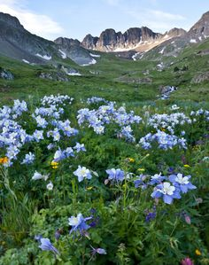 Nothing says spring like the colorful wildflowers of Handies Peak Wilderness Study Area in Colorado. More than beautiful springtime displays, this secluded landscape offers alpine lakes, large canyons and 13 peaks over 13,000 feet. Make the most of this season by hiking, backpacking, camping or mountain climbing in this remarkable wilderness. Photo by Bob Wick, @mypubliclands.