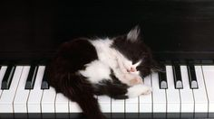 Без кота и жизнь не та ツ | VK
