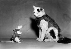 Hector, the first space rat launched by France in February 1961, is shown in his miniature space suit along with one of the cats then in training for a flight aboard a French Veronique rocket.