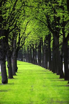 Ideas tree forest green peace for 2019 Beautiful World, Beautiful Places, Tree Tunnel, Parcs, Pathways, Belle Photo, Pretty Pictures, Life Pictures, Beautiful Landscapes