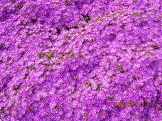 Bienvenida primavera 2013, Santiago de Chile