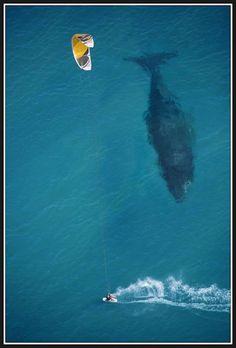 Pocas veces se vio tan bien la escala de una ballena en una foto.