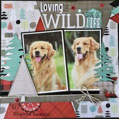 "Lynne Samkin on Instagram: ""Now camp is over, sharing my Inspiration layouts of Jack. #ctmh #ctmhjack #ctmhcricut #goldies #goldens #goldenretriever #ilovekoda…"""