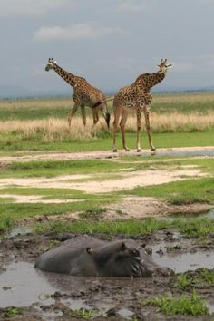 Be sure to pay close attention to the Tanzania Safari, Lodges, Strand, National Parks, Camping, Gallery, Mud, Nature, Travel