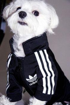 06dc39bf7023 Rocky x Adidas by Luxirare Adidas Sportswear