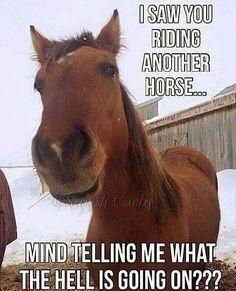Cowgirls und Pferde Cowgirls and Horses - Horses Funny - Funny Horse Meme - - # Funny Horse Memes, Funny Horse Pictures, Funny Horses, Cute Horses, Pretty Horses, Beautiful Horses, Horse Humor, Cute Animal Memes, Animal Jokes