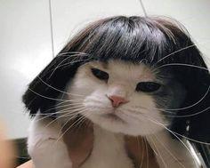 Cute Cat Memes, Funny Animal Memes, Funny Cats, Cute Little Animals, Cute Funny Animals, Baby Animals, Funniest Animals, Cute Kittens, Cats And Kittens