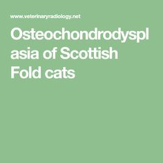 Osteochondrodysplasia of Scottish Fold cats
