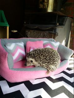 Critter Couch size tiny by CritterCouches on Etsy
