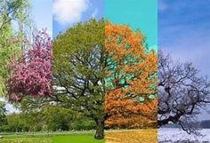 arbre des 4 saisons
