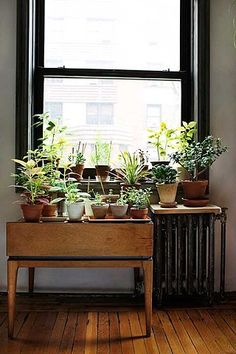 maybe putting a low shelf under the living room windows with more plants... or maybe the heater would mess with them in the winter...