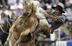 #Gaucho , #Uruguay rodeo which we call  domas or jineteadas