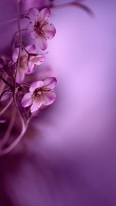 Tapete mit Blumen blumen tapete, is part of Flower backgrounds - Flowery Wallpaper, Flower Background Wallpaper, Framed Wallpaper, Love Wallpaper, Flower Backgrounds, Phone Backgrounds, Wallpaper Backgrounds, Butterfly Wallpaper, Pink Butterfly