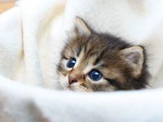Katzenbabys: Tapsige Samtpfoten - Seite 1