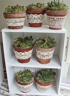 ᐅᐅ decoration with wine boxes and fruit ᐅᐅ Deko mit Weinkisten & Obstkisten Wine boxes decorative garden 66 - Succulents In Containers, Container Plants, Succulents Garden, Garden Pots, Container Gardening, Planting Flowers, Succulent Pots, Deco Floral, Terracotta Pots