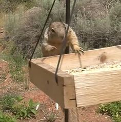 Want To Make Your Bird Feeder Squirrel-proof? The Animal Video Of The Day!!!