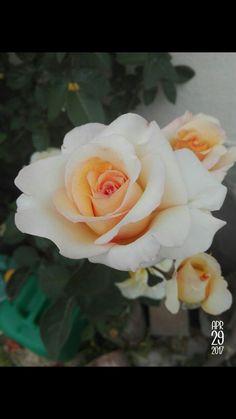 Flower 🌹