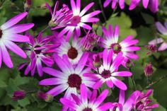 Flower Bin daisy