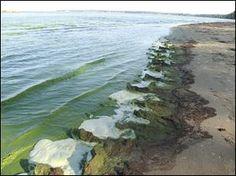 Study: Algal bloom not typical - Toledo Blade - http://hillaryclintonnewsreport.com/study-algal-bloom-not-typical-toledo-blade/