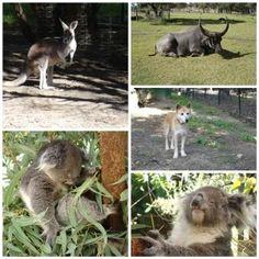 Whiteman Park - Perth, Australia