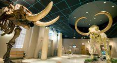 Arizona Museum of Natural History in Downtown Mesa, Arizona