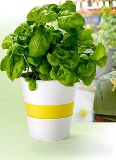 Květináč na bylinky se zavlažovacím systémem