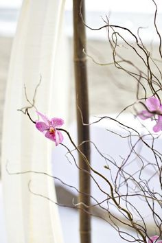 love the branches and orchids