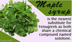What Can Be Used as a Substitute for Fenugreek Leaves?