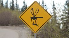 Humorous signage along steep, winding Grande Drive in Denali, Alaska, is meant to get a laugh out of drivers. And keep them focused on the cliff-laden road. Massive mosquitoes are a (normally) not-so-funny feature of the Alaskan wilderness. Funny Street Signs, Funny Road Signs, Mosquito Repelling Plants, Sign Maker, Happy Friday, Weird, Funny Pictures, Harry Potter, Sayings