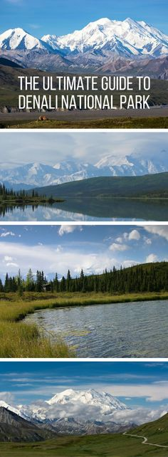 The Ultimate Guide to Denali National Park: Puppies, mountains, and magic buses.