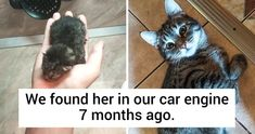 repost: Candid Photos That Show How Fast Our Pets Grow Survival Tips, Survival Skills, Diy Soap Dish Holder, You Can Do, Are You Happy, Change Your Eye Color, Fish Pose, Dining Etiquette, Cobra Pose