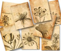 Vintage botanical drawings on aged paper digital collage sheet Botanical Drawings, Botanical Prints, Botanical Illustration, Vintage Tags, Vintage Ephemera, Tienda Natural, Paris Gifts, Tea Bag Art, Collage Background