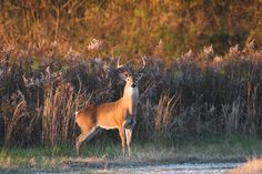 images of october - Bing Images Eufaula Alabama, Hunting Pictures, Viewing Wildlife, Animals Beautiful, Deer, Fall, Autumn, Bing Images, Nature