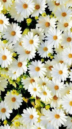 Flower Iphone Wallpaper, Spring Wallpaper, Sunflower Wallpaper, Iphone Background Wallpaper, Aesthetic Iphone Wallpaper, Aesthetic Wallpapers, Daisy Wallpaper, Wallpaper Ideas, 3d Wallpaper Of Flowers